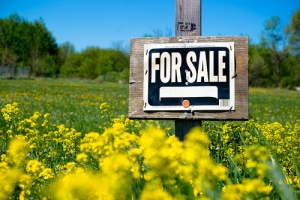 For sale sign in a field of yellow flowers.