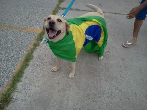 Dog in Brazil flag