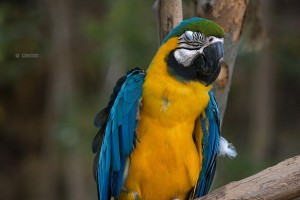 Living with a bilingual parrot