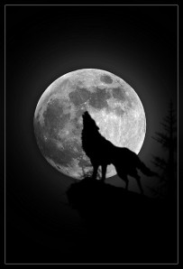 Big Bad Wolf, Bilingual child
